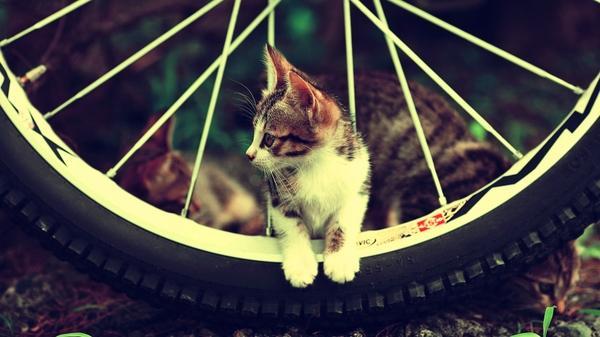 cats,wheels cats wheels motorbikes 1920x1080 wallpaper – Photography Wallpapers – Free Desktop Wallpapers