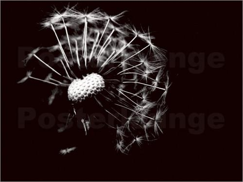 Dandelion photo poster by Ally Coxon favourable to order