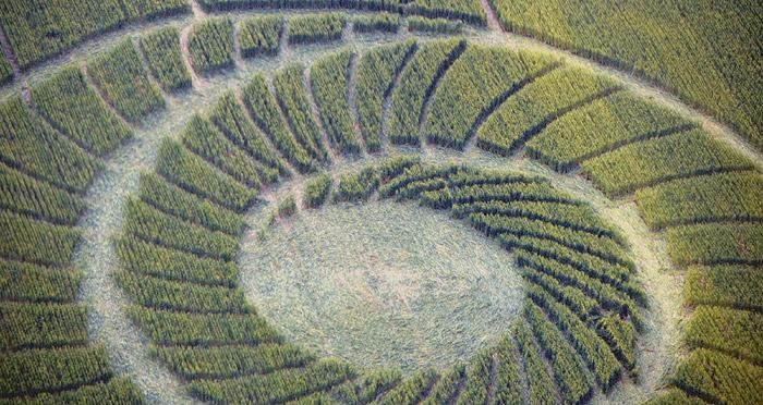 Crop Circle at Bracciano, Bertinoro. . Reported 20th May 2012