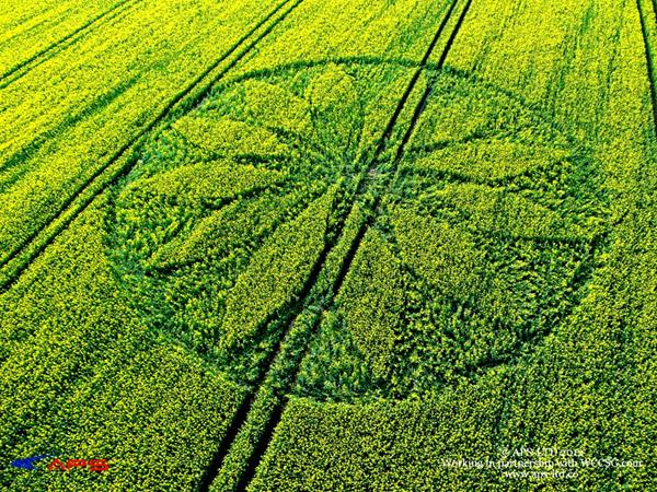 Crop Circle at Hill Barn. nr East Kennett, Wiltshire. Reported 15th April 2012