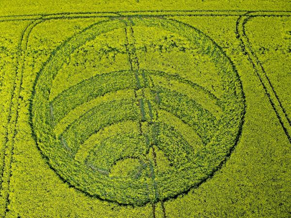 Crop Circle at Yarnbury Castle, Nr Winterbourne Stoke. Wiltshire. Reported Saturday 28th April  2012.