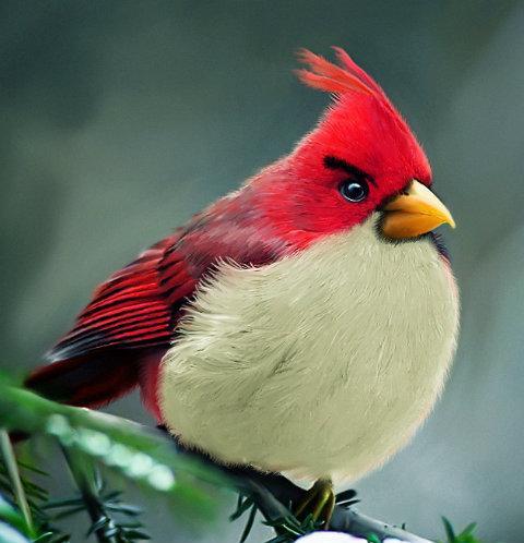 Revista Galileu - NOTÍCIAS - Artista mostra como seriam pássaros de Angry Birds na vida real