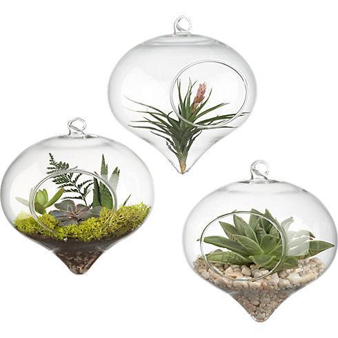 hanging glass terrarium in vases | CB2