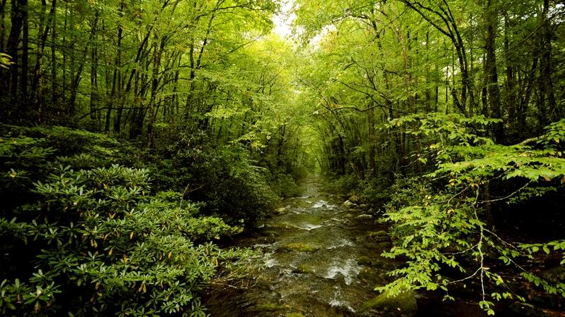 landscapes,green green landscapes nature trees forest rivers 1920x1080 wallpaper – landscapes,green green landscapes nature trees forest rivers 1920x1080 wallpaper – Forests Wallpaper – Desktop Wallpaper