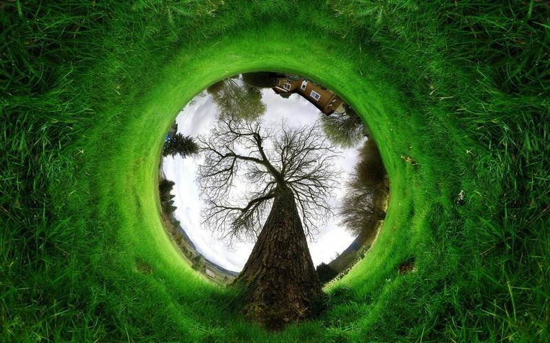 trees,grass trees grass photomanipulation fisheye 2560x1600 wallpaper – trees,grass trees grass photomanipulation fisheye 2560x1600 wallpaper – Grass Wallpaper – Desktop Wallpaper