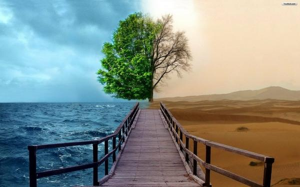 sea,trees trees sea desert photomanipulations 1920x1200 wallpaper – Trees Wallpapers – Free Desktop Wallpapers