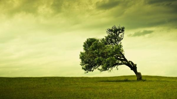 landscapes,trees landscapes trees grass 1920x1080 wallpaper – Trees Wallpapers – Free Desktop Wallpapers