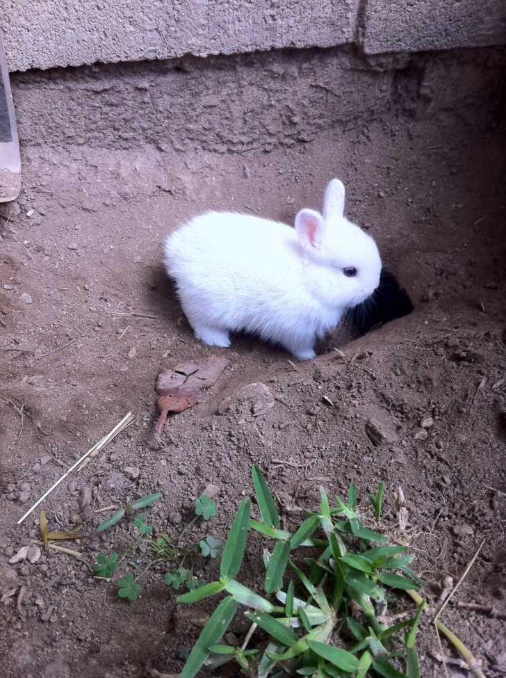 So Sweet Dwarf Rabbit Pics Dwarf-Rabbit04 –