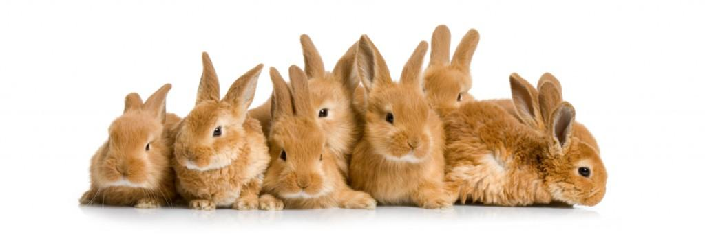 So Sweet Dwarf Rabbit Pics group of bunnies –