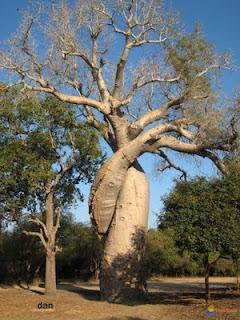 Bekoto paysans: Fokonolona:Entre le rêve et la réalité ( 2 )