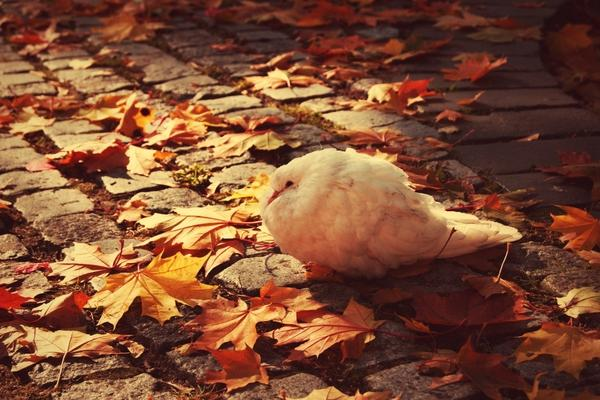 autumn,birds autumn birds 1920x1280 wallpaper – Birds Wallpapers – Free Desktop Wallpapers