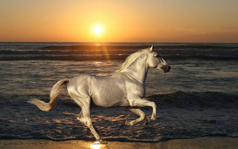 nature,sunset sunset nature sun sea silver horses 1680x1050 wallpaper – nature,sunset sunset nature sun sea silver horses 1680x1050 wallpaper – Horses Wallpaper – Desktop Wallpaper