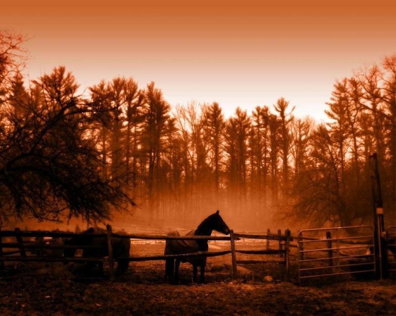 orange,horses orange horses farm life 1280x1024 wallpaper – orange,horses orange horses farm life 1280x1024 wallpaper – Horses Wallpaper – Desktop Wallpaper