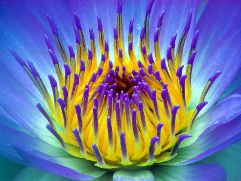 nature,flowers nature flowers 1600x1200 wallpaper – nature,flowers nature flowers 1600x1200 wallpaper – Flowers Wallpaper – Desktop Wallpaper