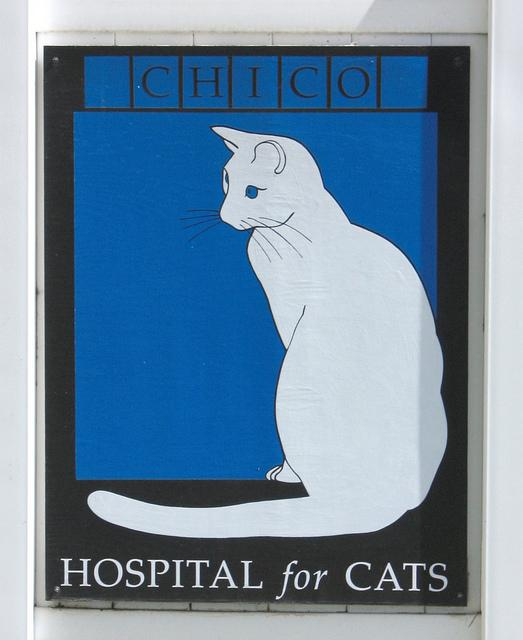 Cat Hospital | Flickr - Photo Sharing!