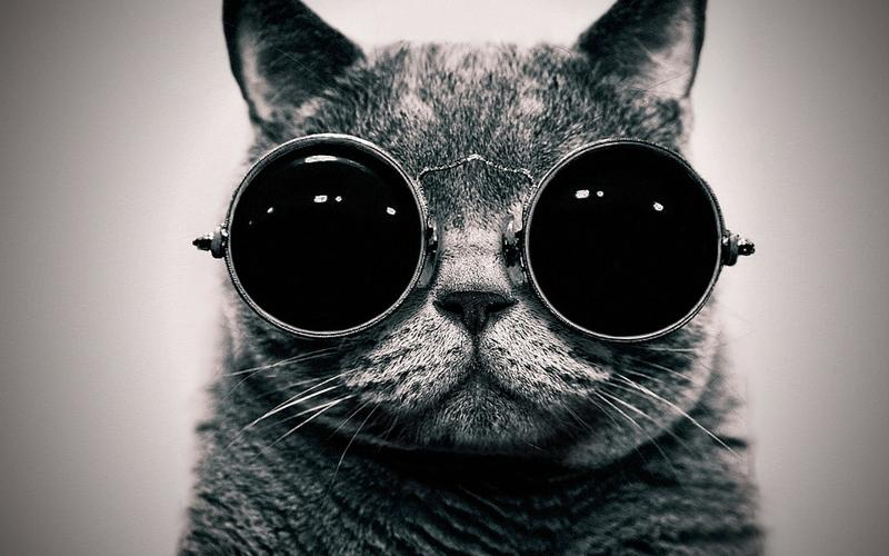 animals,cats cats animals glasses sunglasses hippie schrdingers cat monochrome schrdinger steam punk 1920x – animals,cats cats animals glasses sunglasses hippie schrdingers cat monochrome schrdinger steam punk 1920x – Animal Wallpaper – Desktop Wallpaper
