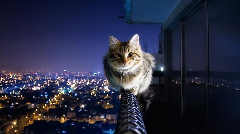 cityscapes,cats cityscapes cats animals monorail kittens 1366x768 wallpaper – cityscapes,cats cityscapes cats animals monorail kittens 1366x768 wallpaper – Animal Wallpaper – Desktop Wallpaper