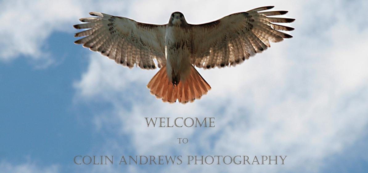 Colin Andrews Photography:Wildlife Photography & Nature Photography