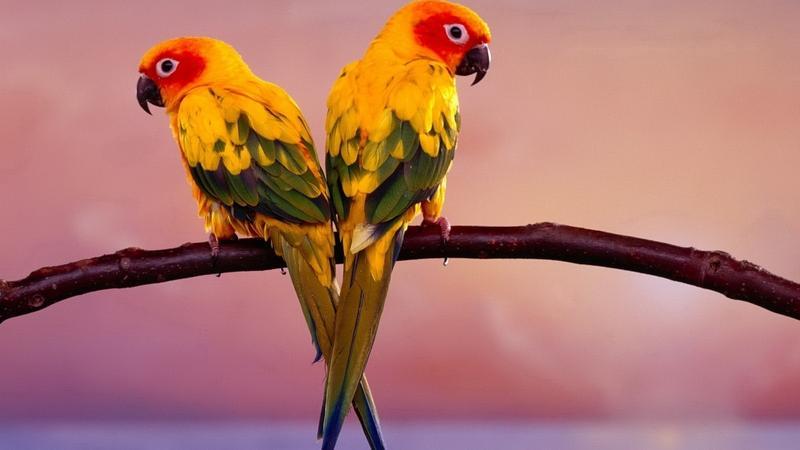 animals,birds birds animals 1920x1080 wallpaper – animals,birds birds animals 1920x1080 wallpaper – Birds Wallpaper – Desktop Wallpaper