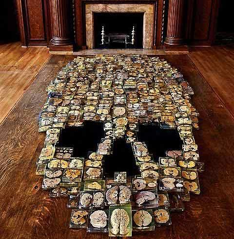 Skull Formed Using 375 Real Brain Slices - My Modern Metropolis