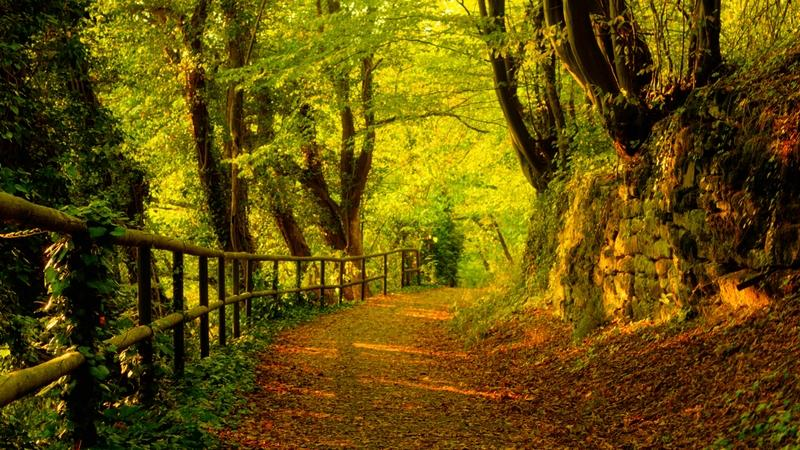 trees,autumn trees autumn forest path 1920x1080 wallpaper – trees,autumn trees autumn forest path 1920x1080 wallpaper – Forests Wallpaper – Desktop Wallpaper