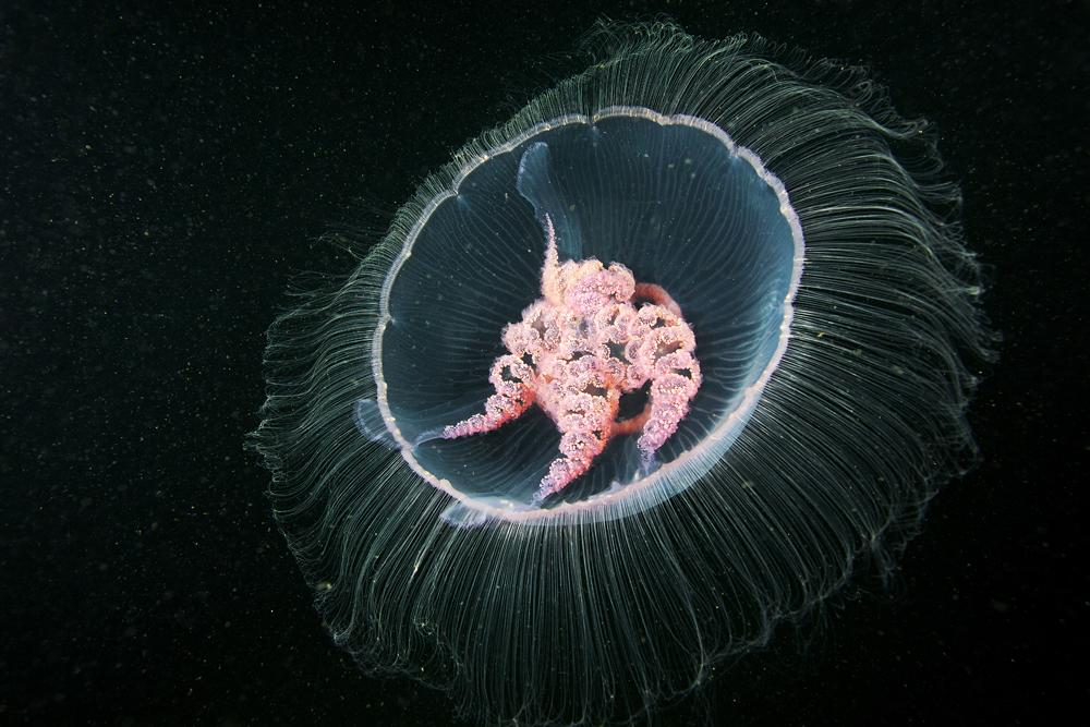Arctic Biologist Shares Astonishing Sea Creatures With the World | Raw File | Wired.com