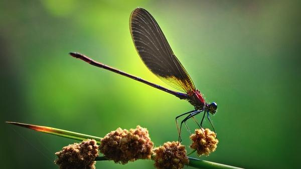 nature,animals nature animals insects wildlife plants depth of field 1920x1080 wallpaper – wildlife Wallpapers – Free Desktop Wallpapers