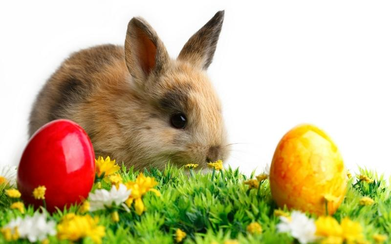 animals,rabbits animals rabbits easter 2560x1600 wallpaper – animals,rabbits animals rabbits easter 2560x1600 wallpaper – Easter Wallpaper – Desktop Wallpaper