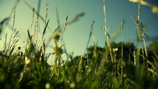 evening grass 1920 1080 hombre cz deviantart com 1920x1080 wallpaper – Grass Wallpapers – Free Desktop Wallpapers