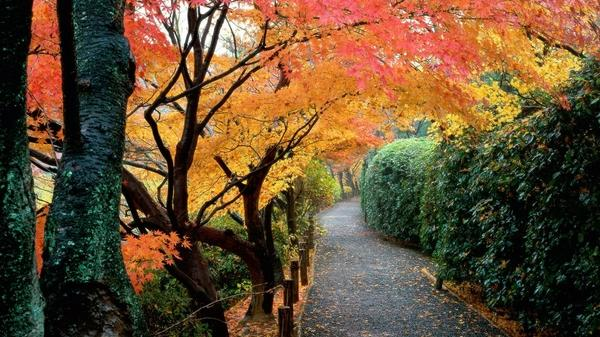 trees,Japan japan trees autumn kyoto colors 1920x1080 wallpaper – trees,Japan japan trees autumn kyoto colors 1920x1080 wallpaper – Autumn Wallpaper – Desktop Wallpaper