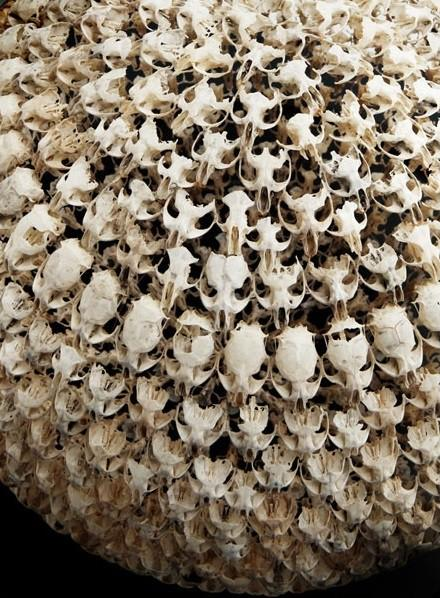 The Beauty of Life, Death, and Rebirth / Alastair Mackie's sphere of intricately connected mouse skulls from regurgitated barn owl pellets found around his family farm.