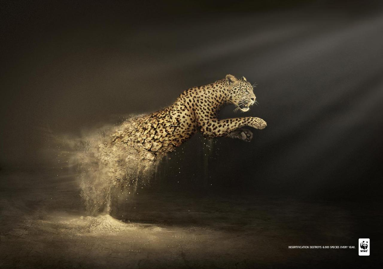 WWF Desertification: Leopard | The Visual Wall