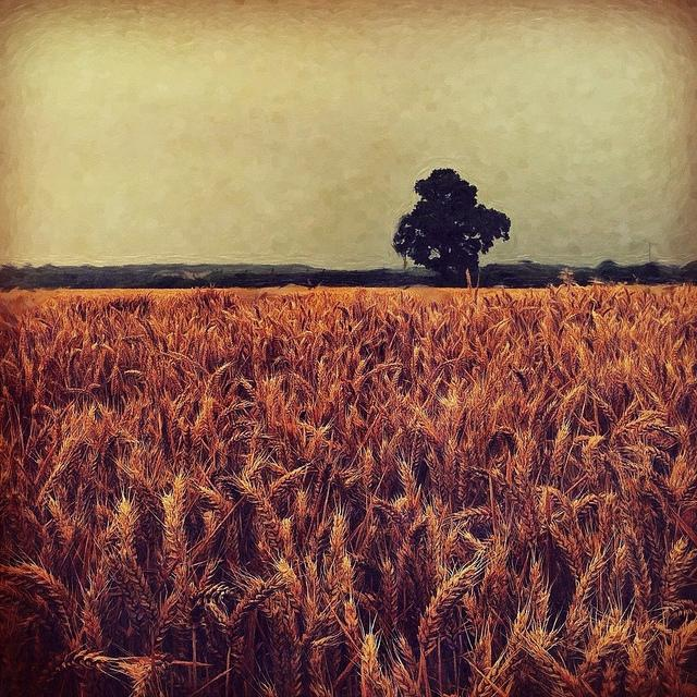 Cornfield | Flickr - Photo Sharing!