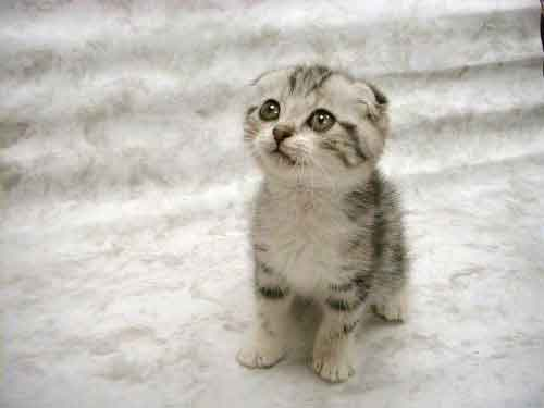 Google Afbeeldingen resultaat voor http://www.pictures-of-kittens-and-cats.com/images/cute-kitten-pictures-002.jpg