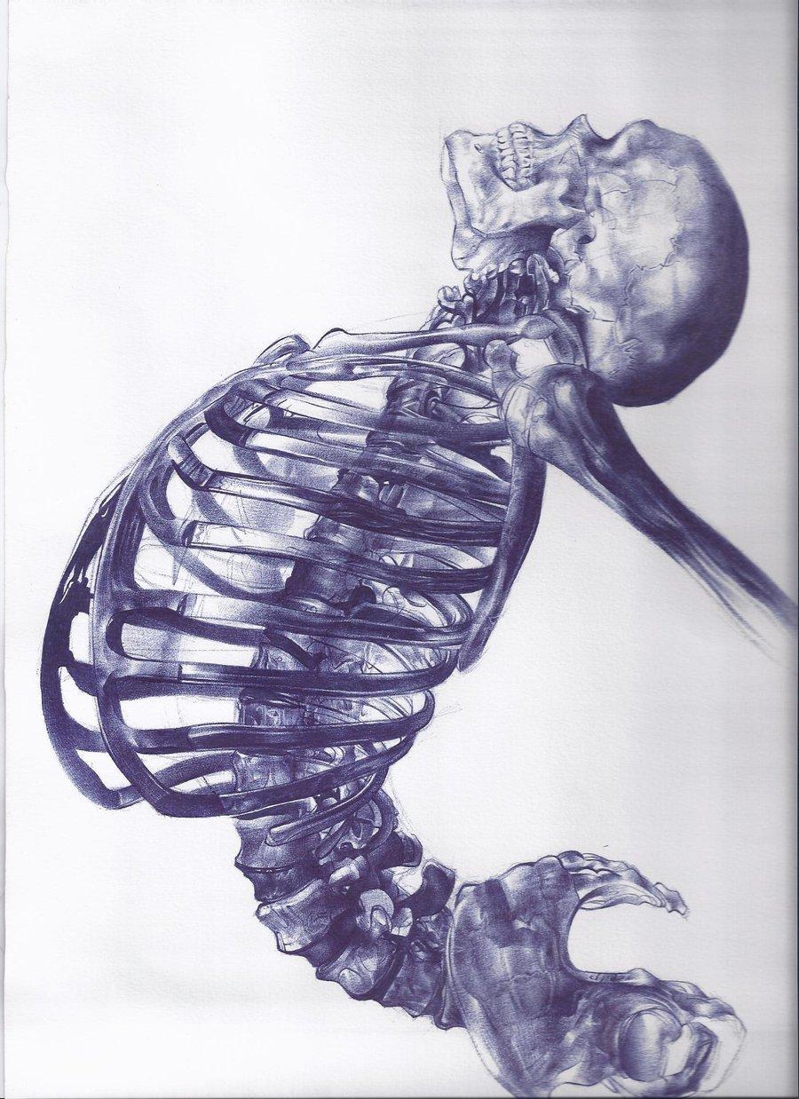 Scheletro umano by ~AndreaSchillaci