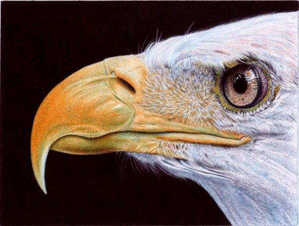 Bald Eagle - Ballpoint Pen by =VianaArts