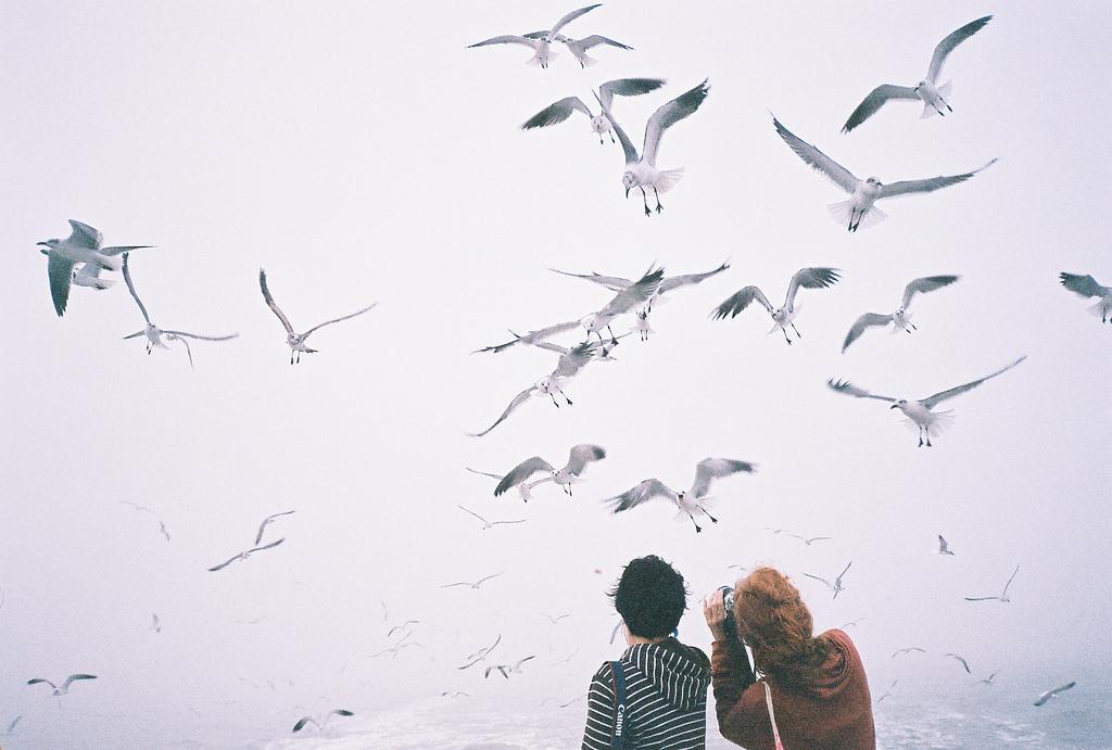 ???? | ????? | Flickr - ?????
