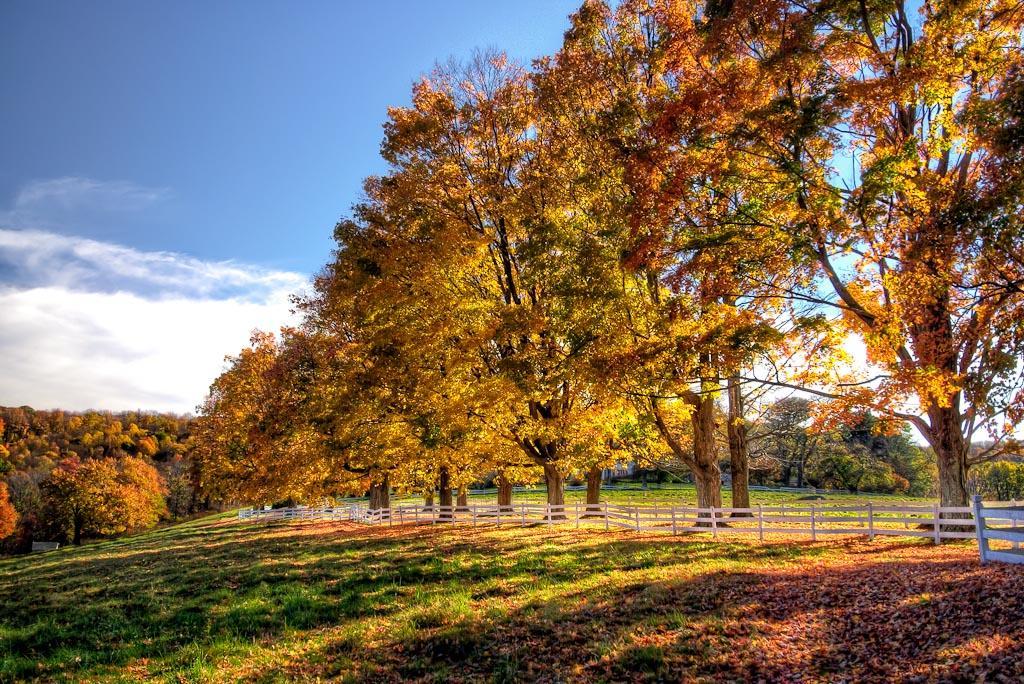 Foliage-in-New-England.jpg (1024×684)