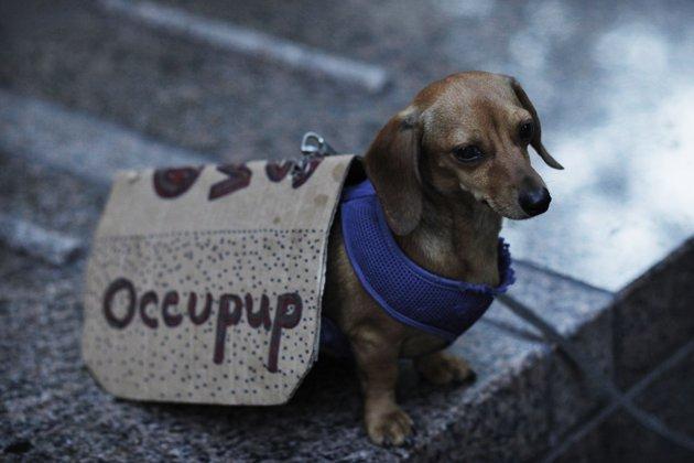 Foto Le foto del giorno - Yahoo! Notizie Italia