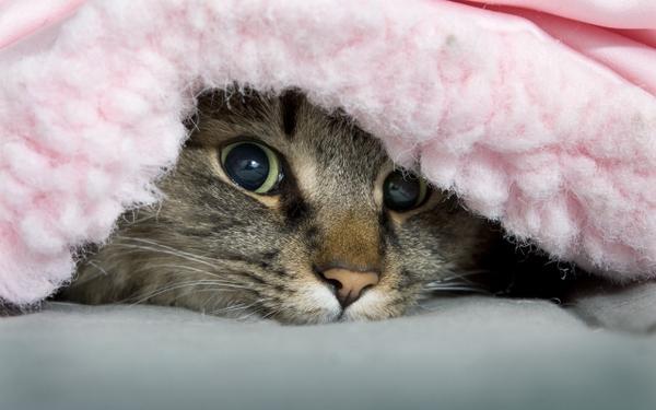 cats,animals cats animals peeking 2560x1600 wallpaper – Cats Wallpapers – Free Desktop Wallpapers