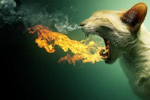 Flaming Cat + PSD by =PSHoudini