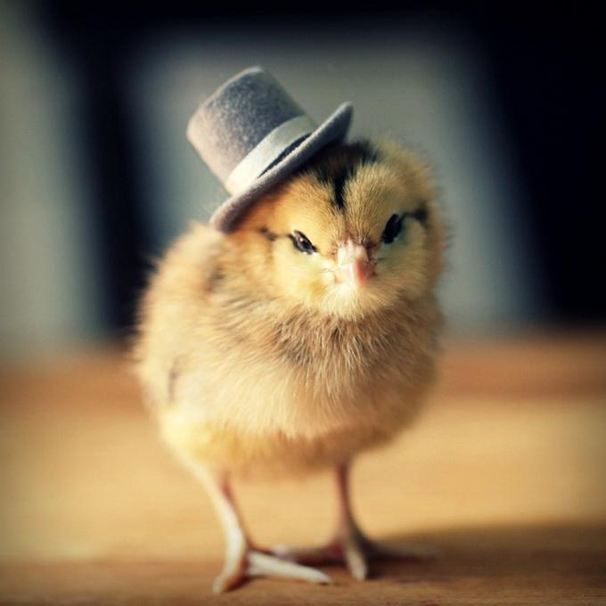 Chicks in Hats by Julie Persons