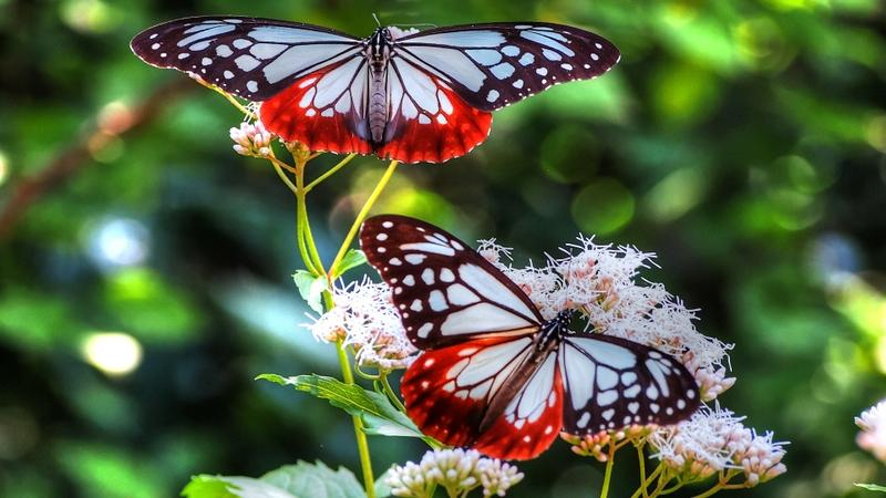 butterfly,insects butterfly insects macro depth of field 1920x1080 wallpaper – butterfly,insects butterfly insects macro depth of field 1920x1080 wallpaper – Butterflies Wallpaper – Desktop Wallpaper