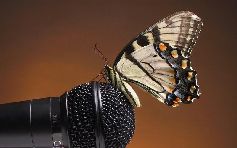 butterfly,close-up closeup butterfly microphones 1920x1200 wallpaper – butterfly,close-up closeup butterfly microphones 1920x1200 wallpaper – Butterflies Wallpaper – Desktop Wallpaper
