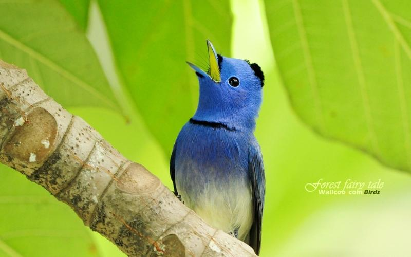 birds,wildlife birds wildlife 1920x1200 wallpaper – birds,wildlife birds wildlife 1920x1200 wallpaper – Wildlife Wallpaper – Desktop Wallpaper
