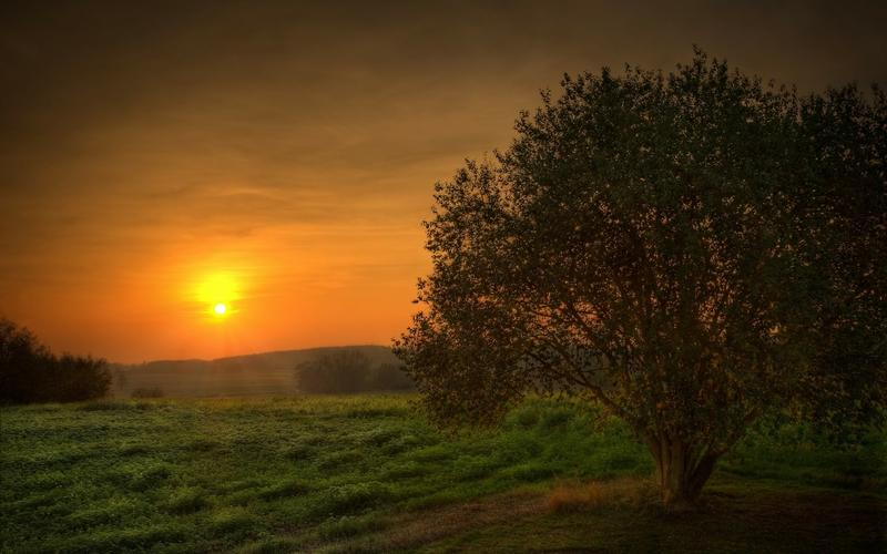 landscapes,sunset sunset landscapes nature trees fields skyscapes 2560x1600 wallpaper – landscapes,sunset sunset landscapes nature trees fields skyscapes 2560x1600 wallpaper – Fields Wallpaper – Desktop Wallpaper