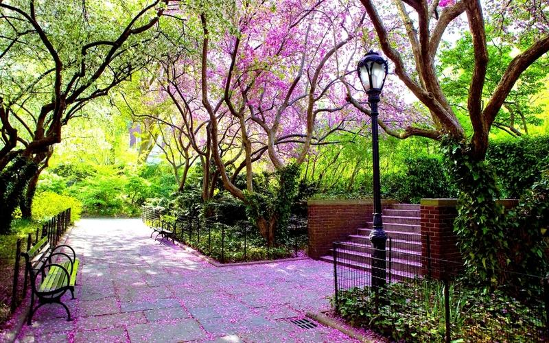 nature,trees nature trees pink stairways bench scenic lamp posts hdr photography 1920x1200 wallpaper – nature,trees nature trees pink stairways bench scenic lamp posts hdr photography 1920x1200 wallpaper – Photography Wallpaper – Desktop Wallpaper