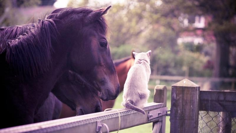 animals,cats cats animals horses 1920x1080 wallpaper – animals,cats cats animals horses 1920x1080 wallpaper – Horses Wallpaper – Desktop Wallpaper
