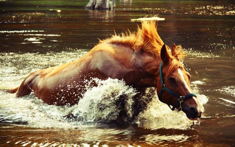 animals,water water animals horses 2560x1600 wallpaper – animals,water water animals horses 2560x1600 wallpaper – Horses Wallpaper – Desktop Wallpaper