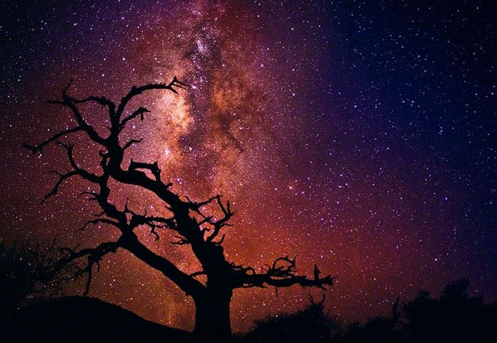 Tree of the Universe - Clouds / Skies / Stars - The Work